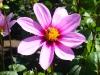 fiori_3